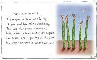 asparagus-w